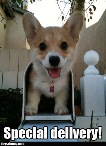 special_delivery_puppy_dog_cute_funny_picture